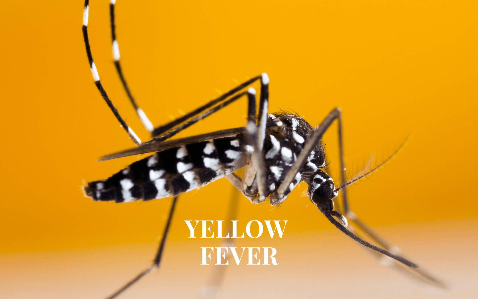 Yellow Fever Vaccination in Glasgow